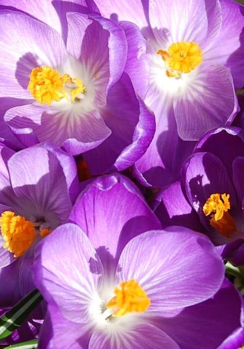 Blumen und Pflanzen aus der Gärtnerei Ziegengeist