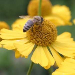 Insektenpflanzen